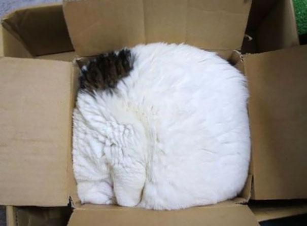 ТОП-13 кумедних котиків, які можуть спати будь-де і будь-коли - фото 1