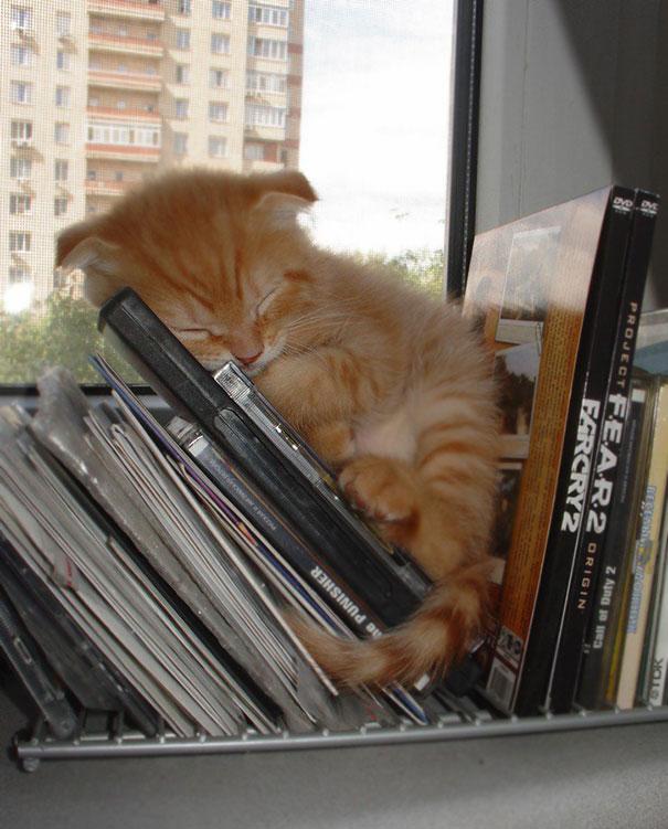 ТОП-13 кумедних котиків, які можуть спати будь-де і будь-коли - фото 2
