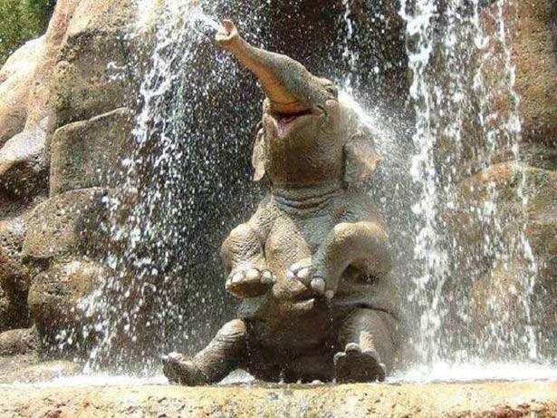 День слона (ФОТО) - фото 1