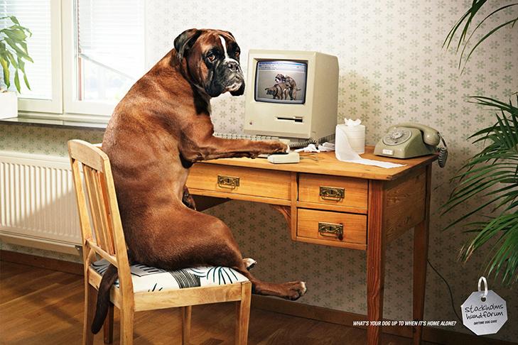 Може, пора переводити собаку на Pedigree Light? - фото 13