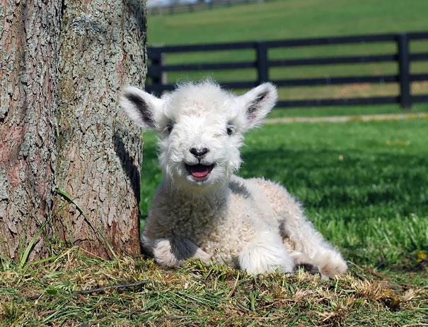 ТОП-6 тварин з чарівною посмішкою - фото 4
