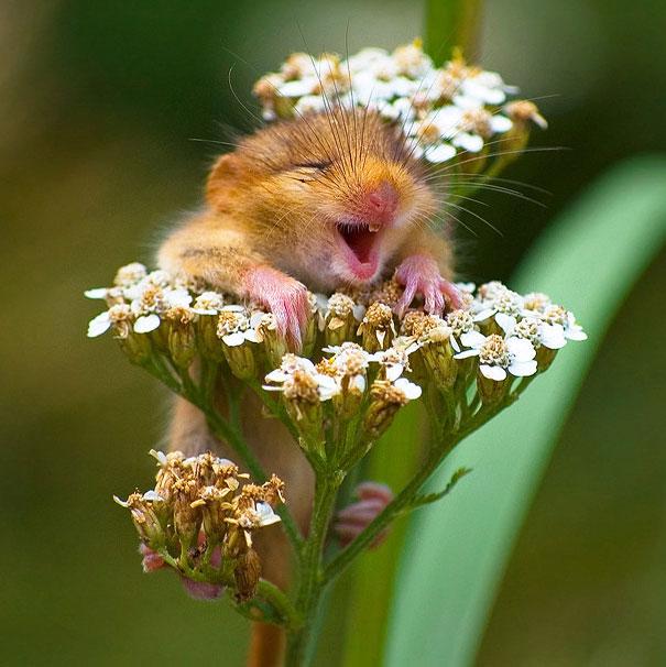 ТОП-6 тварин з чарівною посмішкою - фото 1