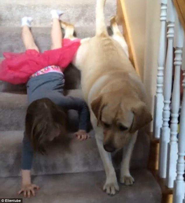 Як дівчинка і лабрадор спускаються сходами на пузі - фото 1