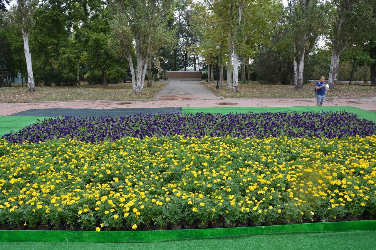 Леніну і не снилось: у Миколаєві з'явився квітковий двоколор для селфі - фото 2