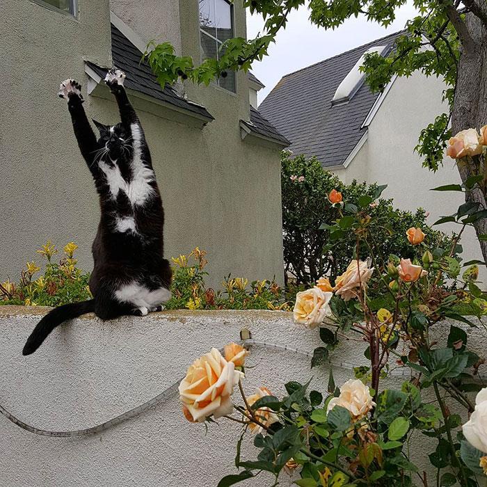 Лапи вгору: Як кіт-привіт Мережу підкорював - фото 4