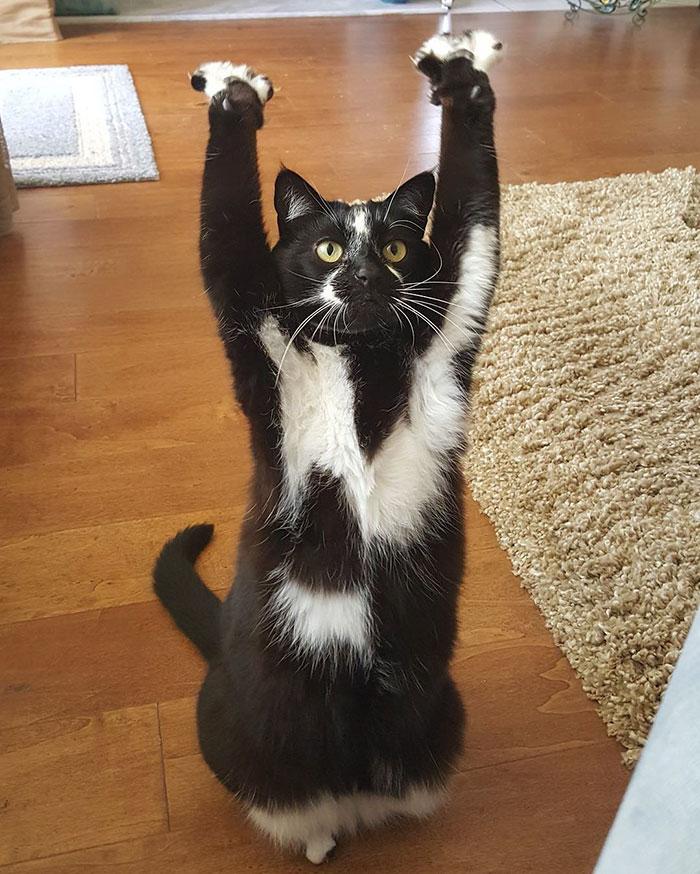Лапи вгору: Як кіт-привіт Мережу підкорював - фото 3