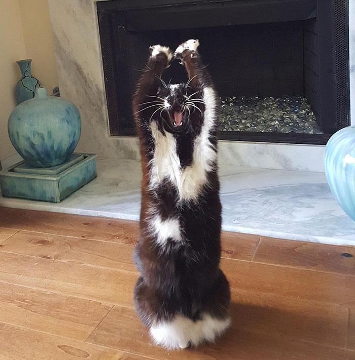 Лапи вгору: Як кіт-привіт Мережу підкорював - фото 2