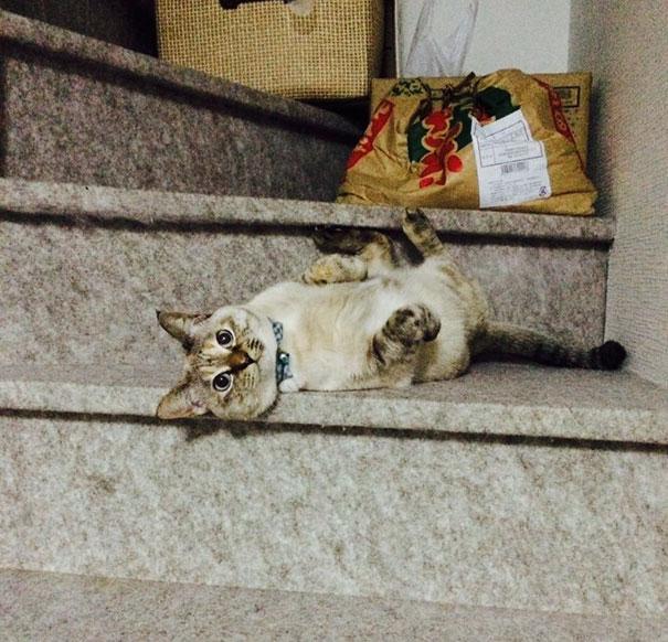 Як кошеня знайшло свого власника у парку - фото 2
