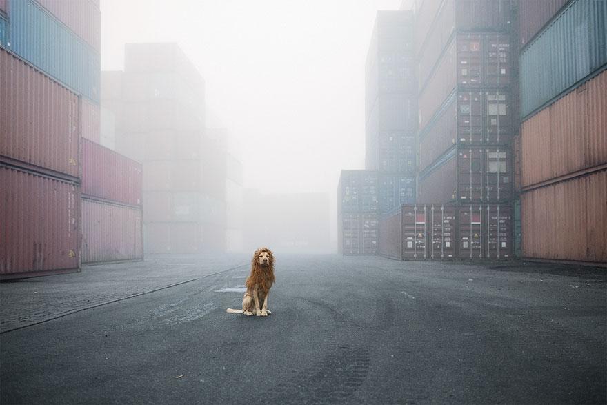 Як бездомний пес, знайдений у смітті, перетворився на Короля Лева - фото 5