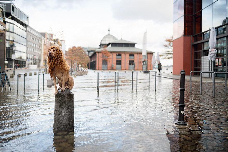 Як бездомний пес, знайдений у смітті, перетворився на Короля Лева - фото 1