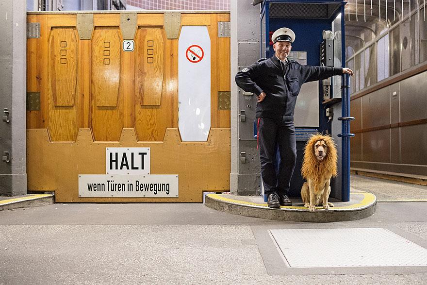 Як бездомний пес, знайдений у смітті, перетворився на Короля Лева - фото 2