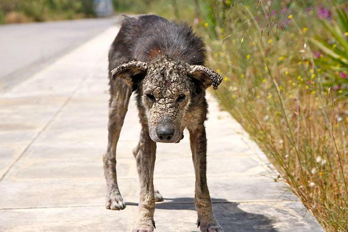 Як собака, що перетворилася на камінь, поверталася до життя - фото 2