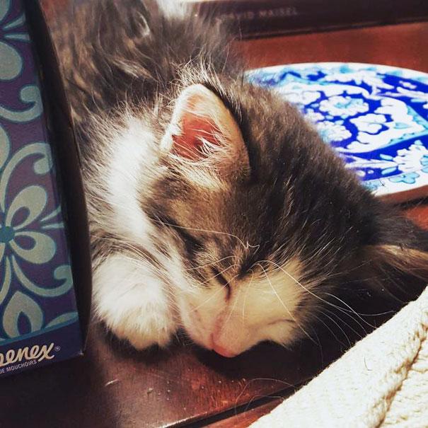 Як зворушливе кошеня, яке жило під вантажівкою, підкоряє серця - фото 3