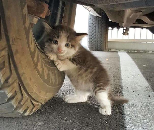 Як зворушливе кошеня, яке жило під вантажівкою, підкоряє серця - фото 1