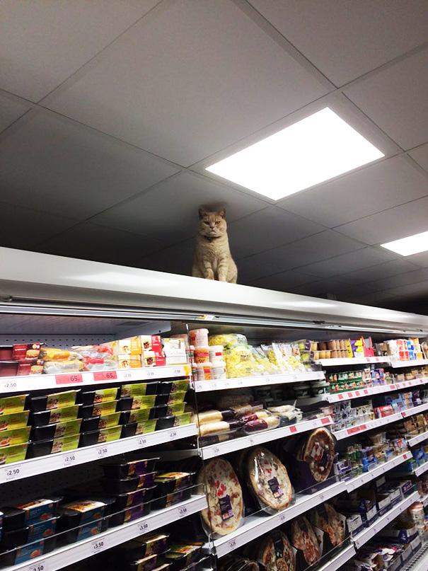 Як нахабний кіт вдає себе власником супермаркета  - фото 3