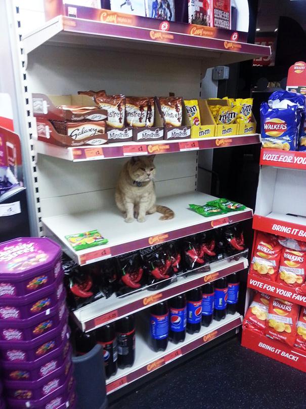 Як нахабний кіт вдає себе власником супермаркета  - фото 5