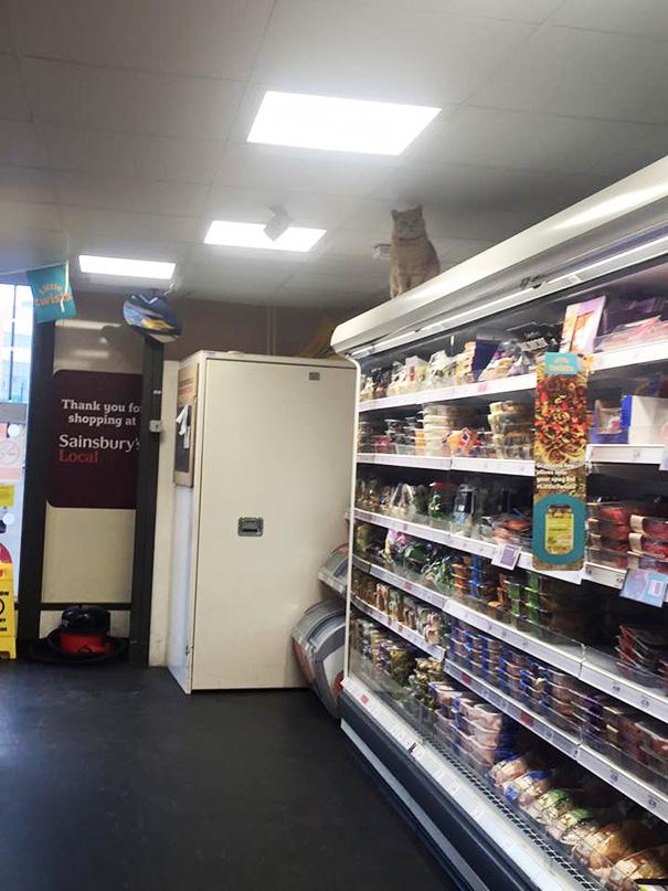 Як нахабний кіт вдає себе власником супермаркета  - фото 4