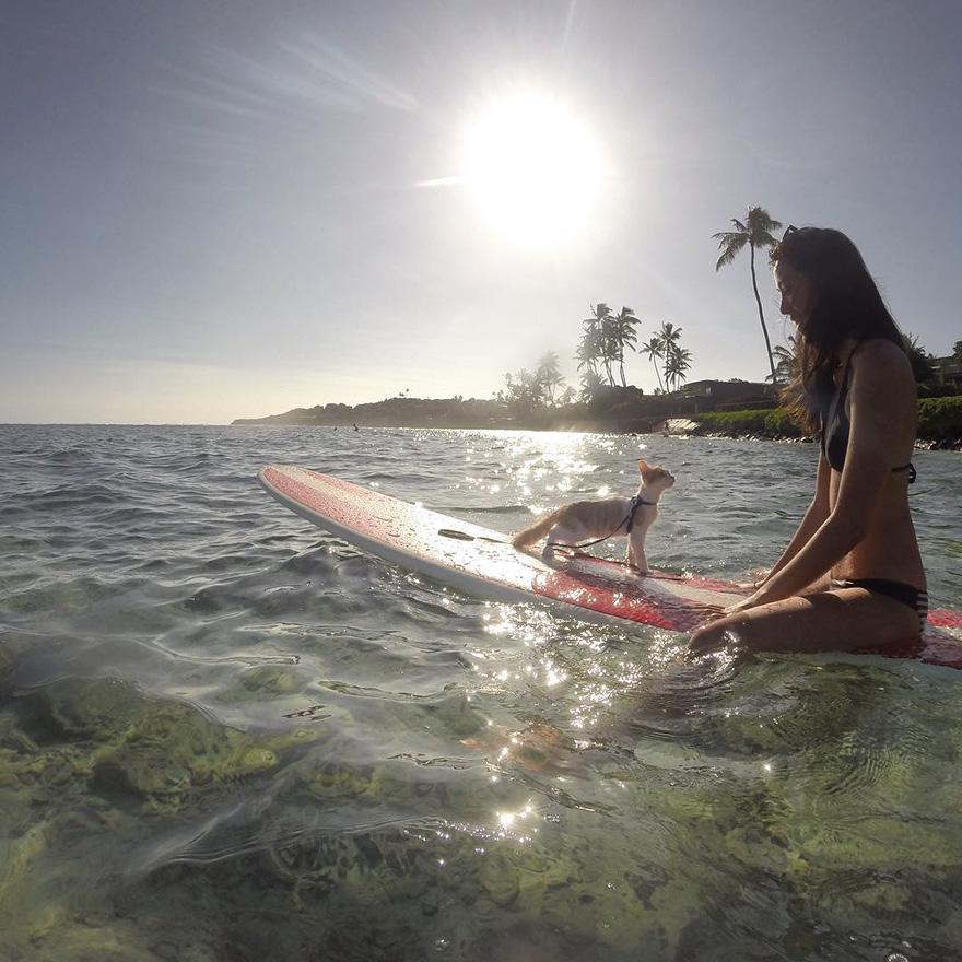 Як одноокий кіт-серфер підкорював хвилі на Гаваях - фото 2