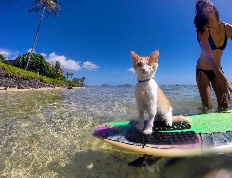 Як одноокий кіт-серфер підкорював хвилі на Гаваях - фото 3