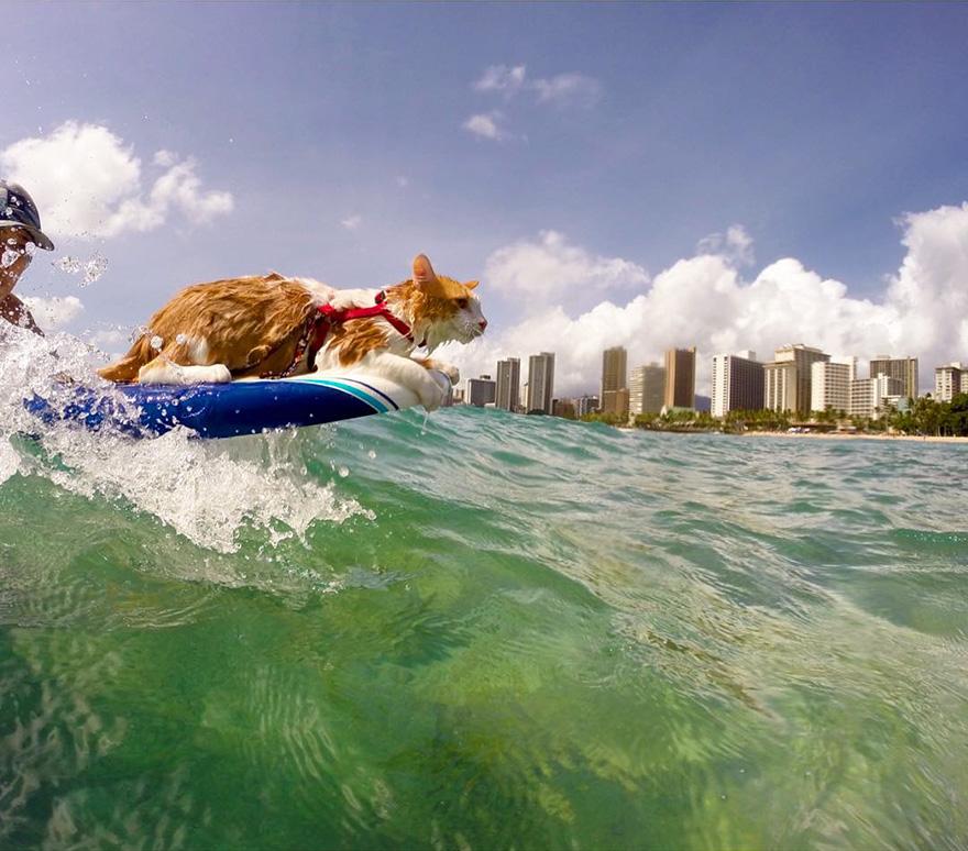 Як одноокий кіт-серфер підкорював хвилі на Гаваях - фото 1