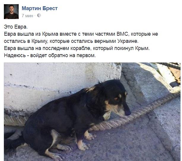 Чим займаються на Донбасі найкращі друзі бійців АТО - 7 - фото 13