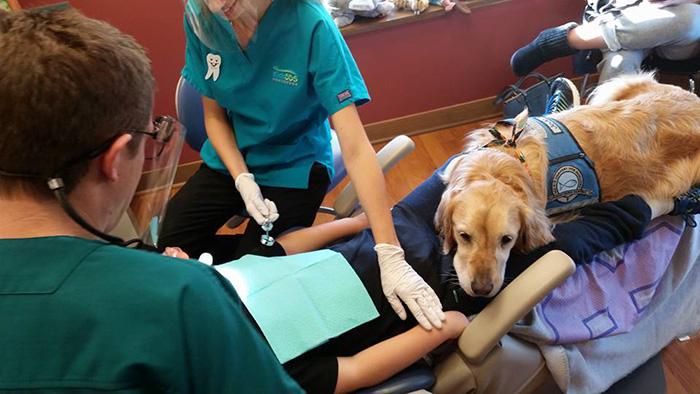 Як лабрадор працює стоматологом - фото 3