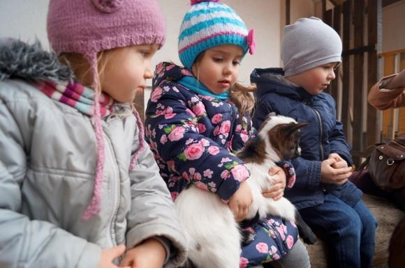 У вінницькому центральному парку народились карликові козенята - фото 2