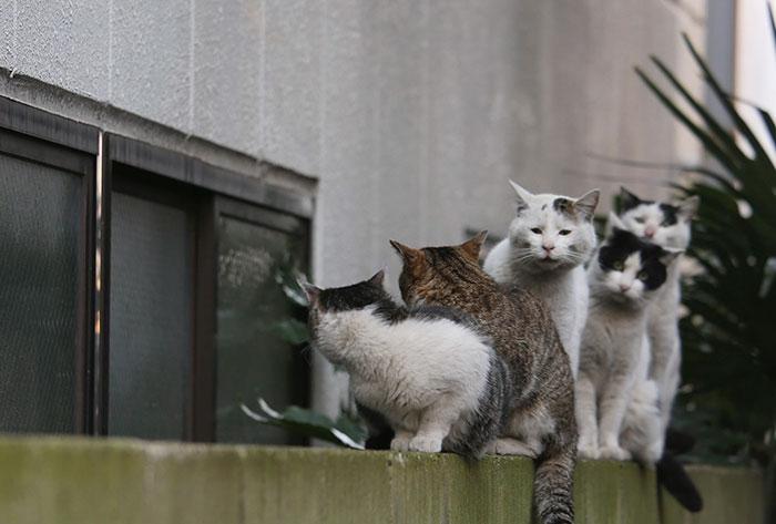 Як коти-неформали у Токіо тусуються - фото 6