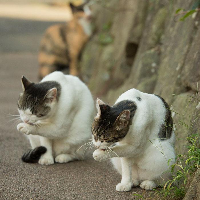 Як коти-неформали у Токіо тусуються - фото 2