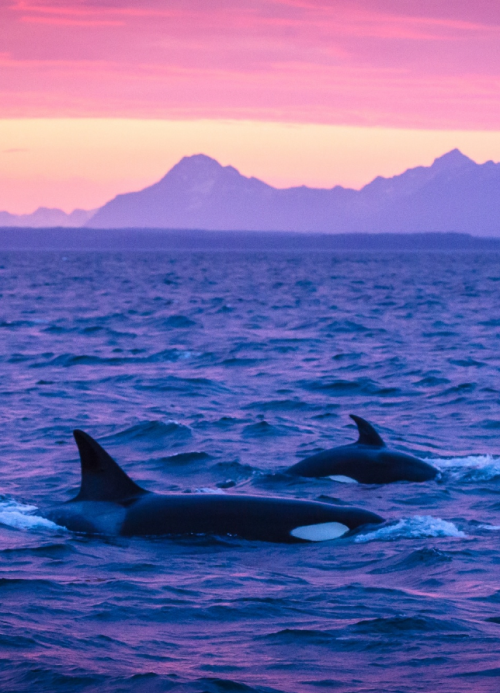 ТОП-20 кумедних та моторошних випадків з китами та делфінами - фото 2