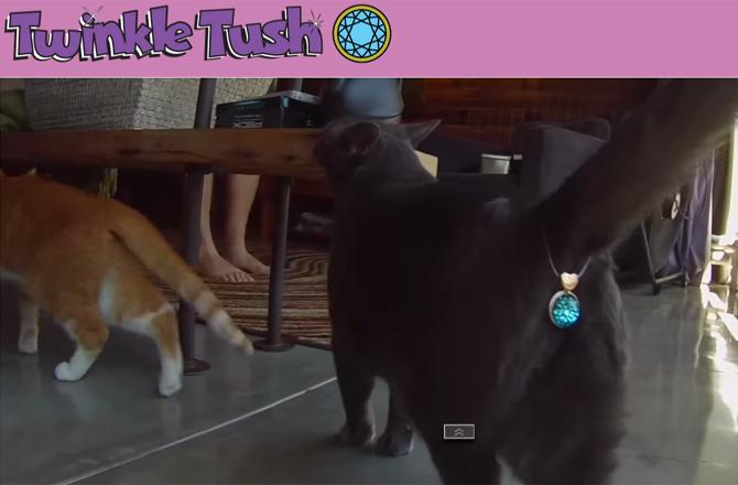 Підвіска на дупу і облизувач: ТОП-5 кумедних девайсів для котів - фото 2
