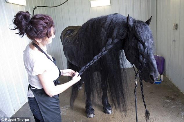 Як найкрасивішому у світі коню завивають гриву - фото 2
