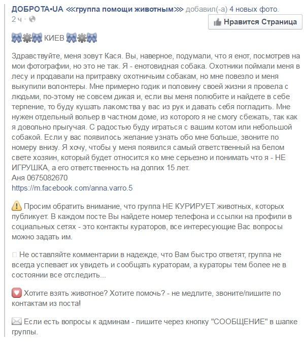Київські волонтери розшукують власника для єнота, якому дуже потрібний дім - фото 2