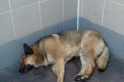 В російському аеропорту пес вже тиждень чекає на господаря - фото 1