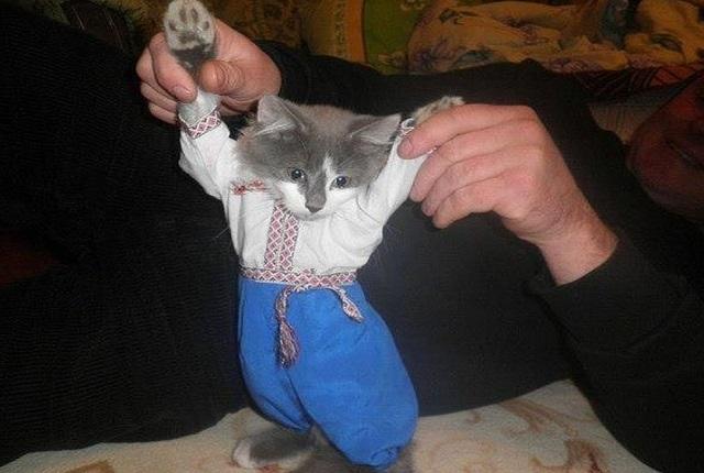 Як проходить День вишиванки у котів - фото 4