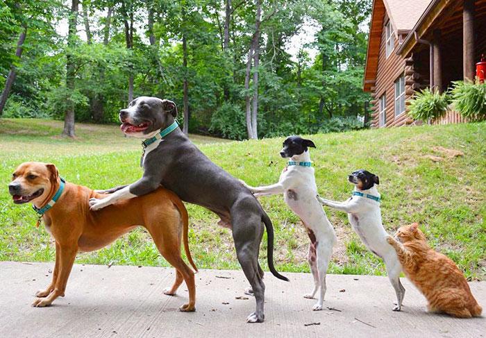Як чотири собаки, кіт і дві качки стали нерозлучними друзями - фото 1