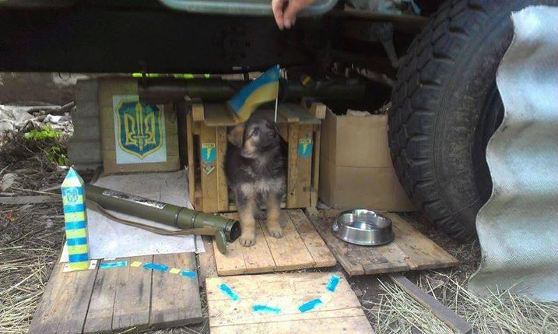 Чим займаються на Донбасі найкращі друзі бійців АТО - фото 2