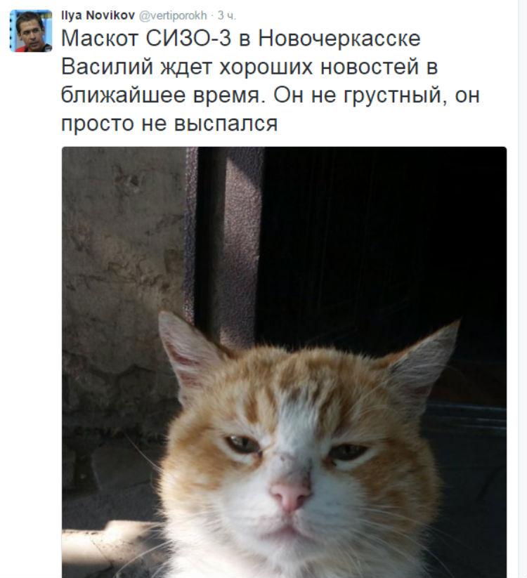 Кіт біля СІЗО Савченко вже чекає гарних новин (ФОТО) - фото 1