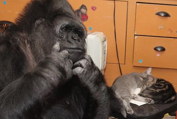 Символи-2016: найвідоміші та найприкольніші мавпи у світі - фото 12