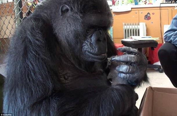 Символи-2016: найвідоміші та найприкольніші мавпи у світі - фото 15