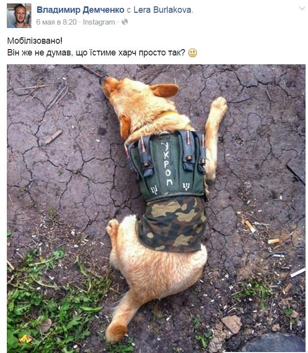 Чим займаються на Донбасі найкращі друзі бійців АТО-3 - фото 10