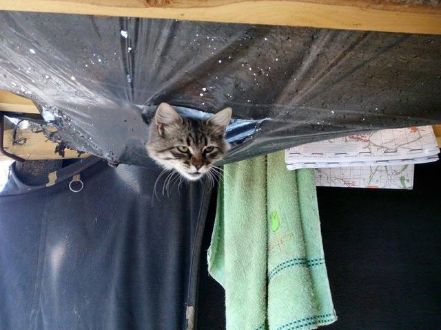 За що котам в АТО треба поставити пам'ятник-4 - фото 5