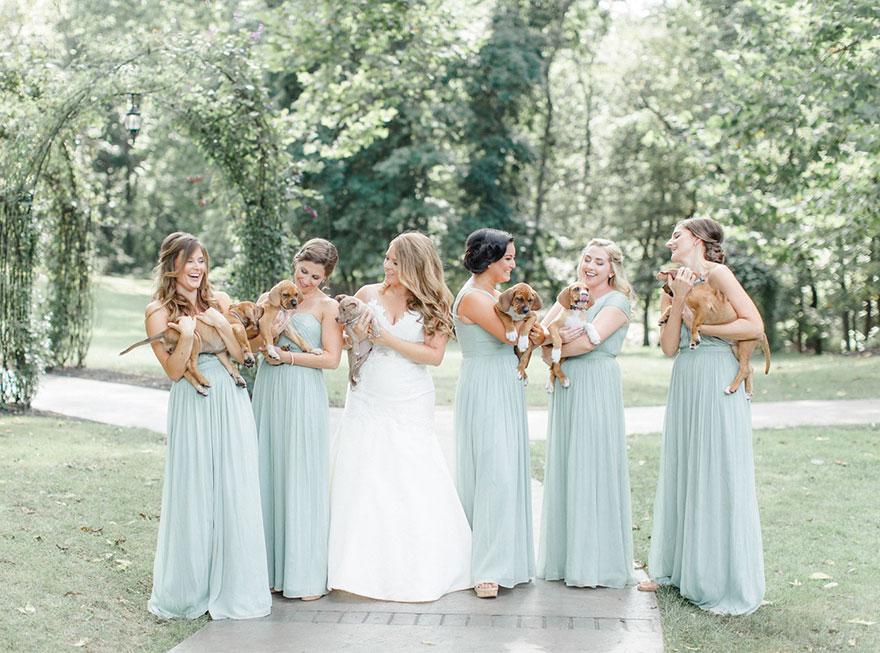 Як наречена замінила квіти на цуциків - фото 1