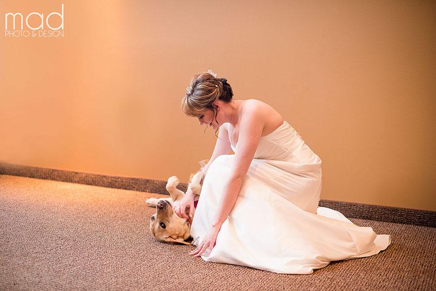 Як службова собака заспокоювала наречену на весіллі  - фото 1