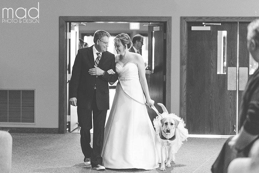 Як службова собака заспокоювала наречену на весіллі  - фото 2