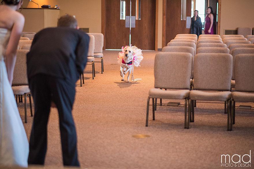Як службова собака заспокоювала наречену на весіллі  - фото 3