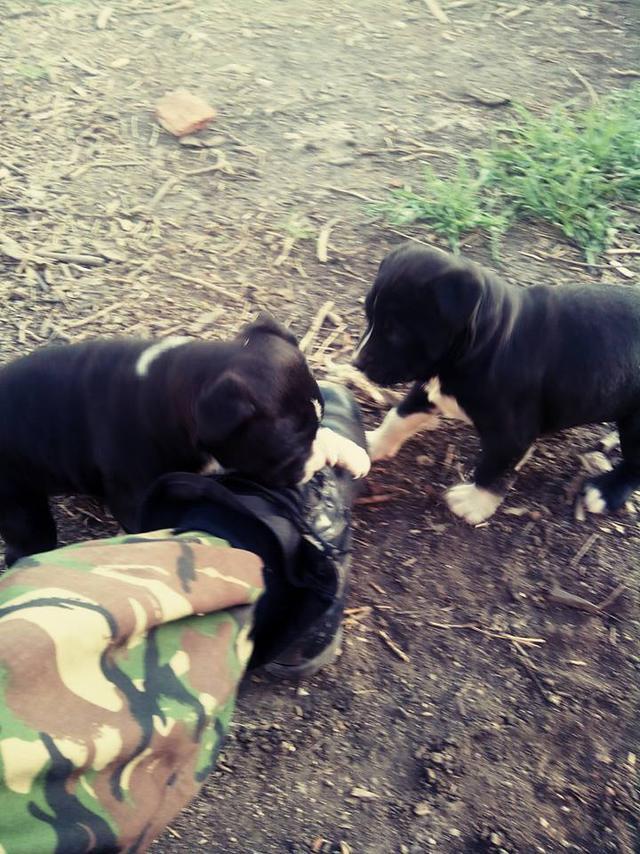 Чим займаються на Донбасі найкращі друзі бійців АТО - 2 - фото 5