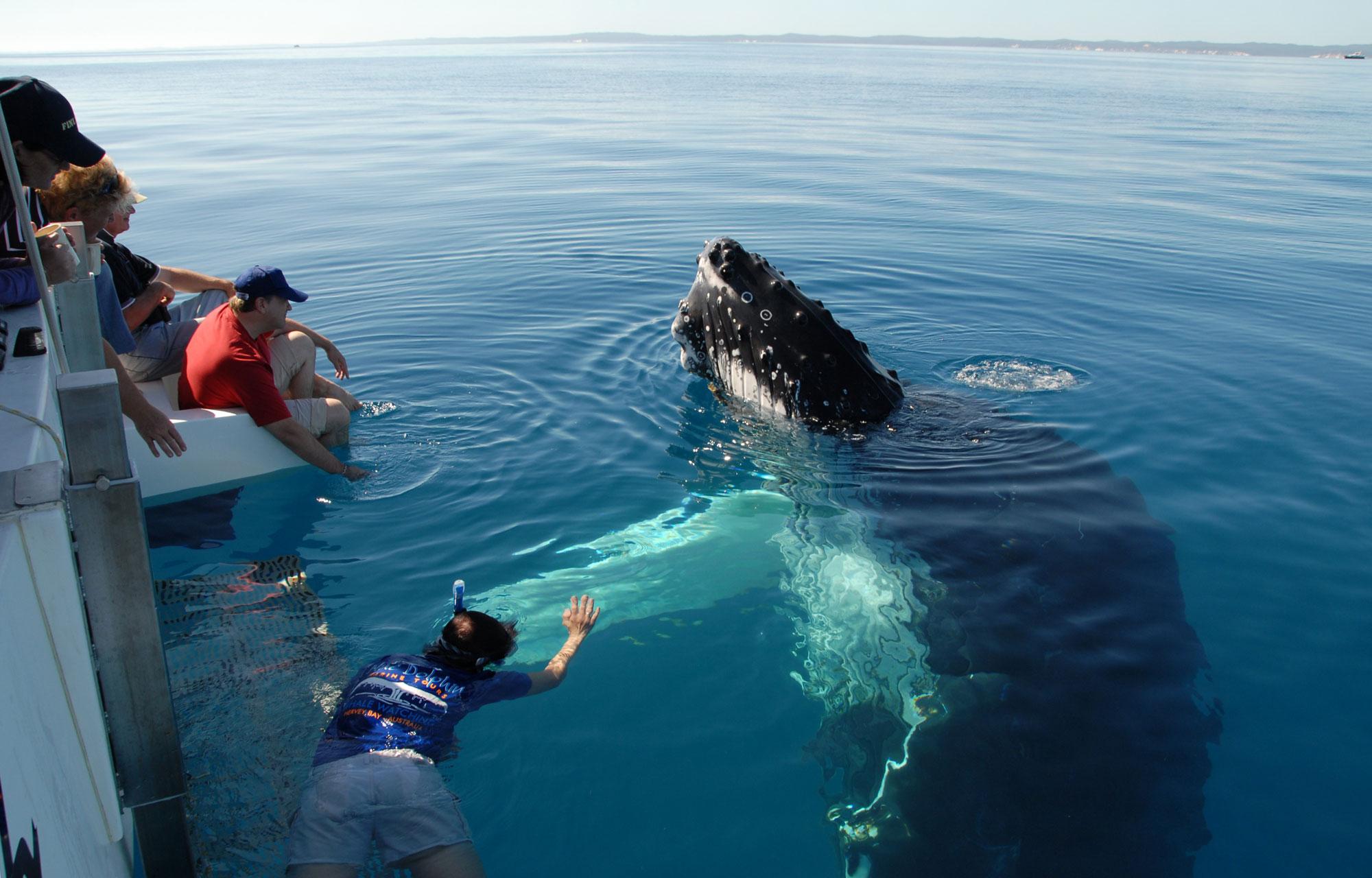 ТОП-20 кумедних та моторошних випадків з китами та делфінами - фото 1