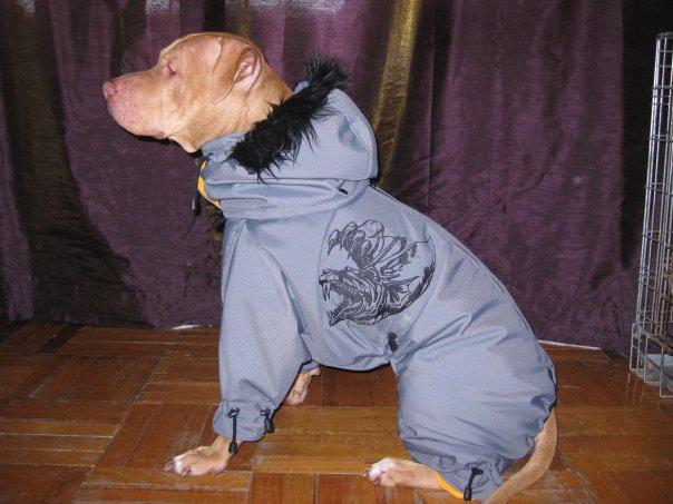 Холод собачий: ТОП-20 собак у зимовому одязі - фото 18