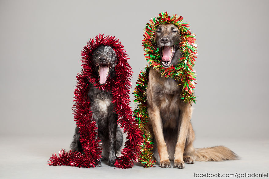 Як виглядають найноворічніші собаки у світі - фото 6